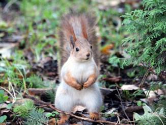 Introducing The Squirrel Break Productivity Method