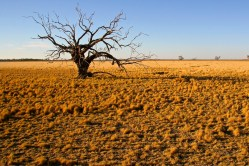 Outback - Dried up Lake