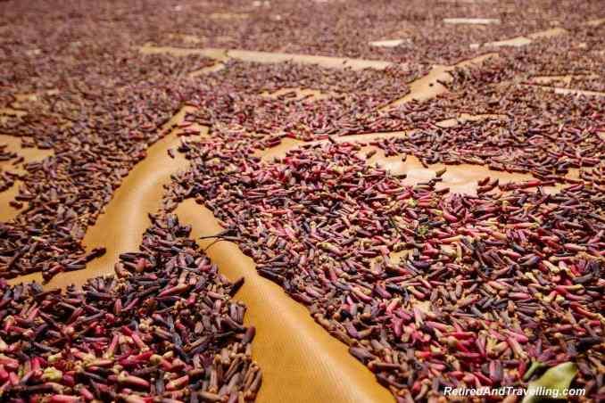 Spice Harvesting.jpg