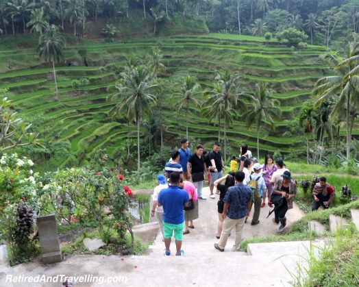 Tegalalang Rice Terraces.jpg