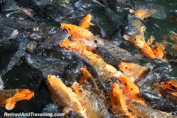 Gunung Kawi Sebatu Temple Koi Pond - Ubud Treasures.jpg