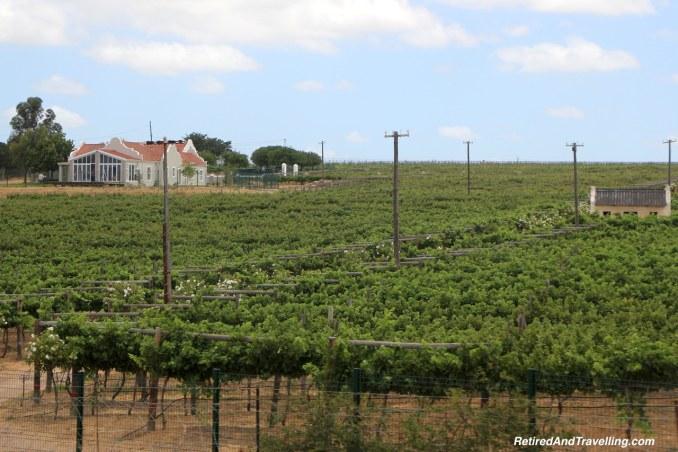 Stellenbosch Wine Region - Italian Wine Tasting At Sea.jpg