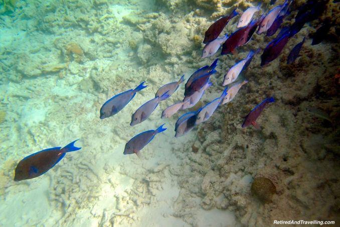 Fish School Klien Bonaire Beach Snorkel - Head Underwater In Bonaire.jpg