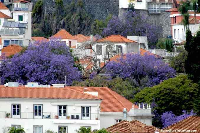 Funchal Madeira - 4 Weeks in Portugal.jpg