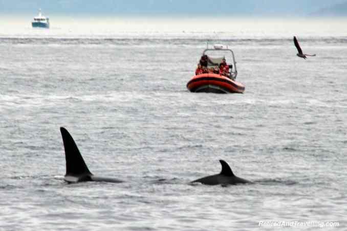 Orca Sightings.jpg