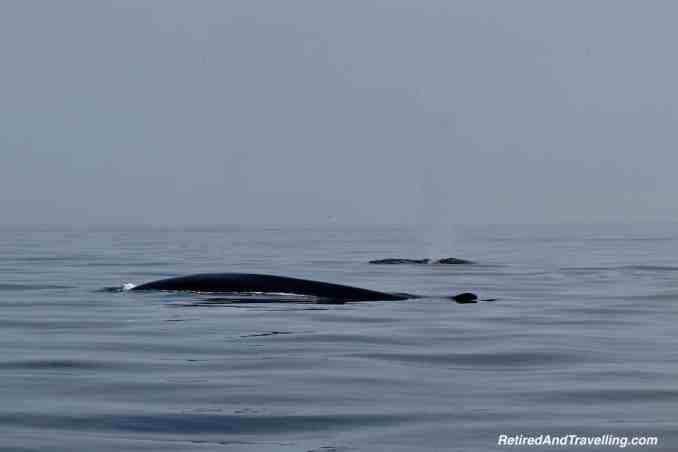 Tadoussac Whale Watching.jpg