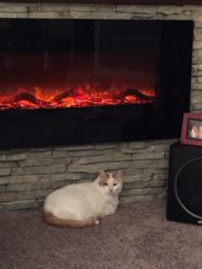cat and fireplace