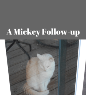 Mickey follow up