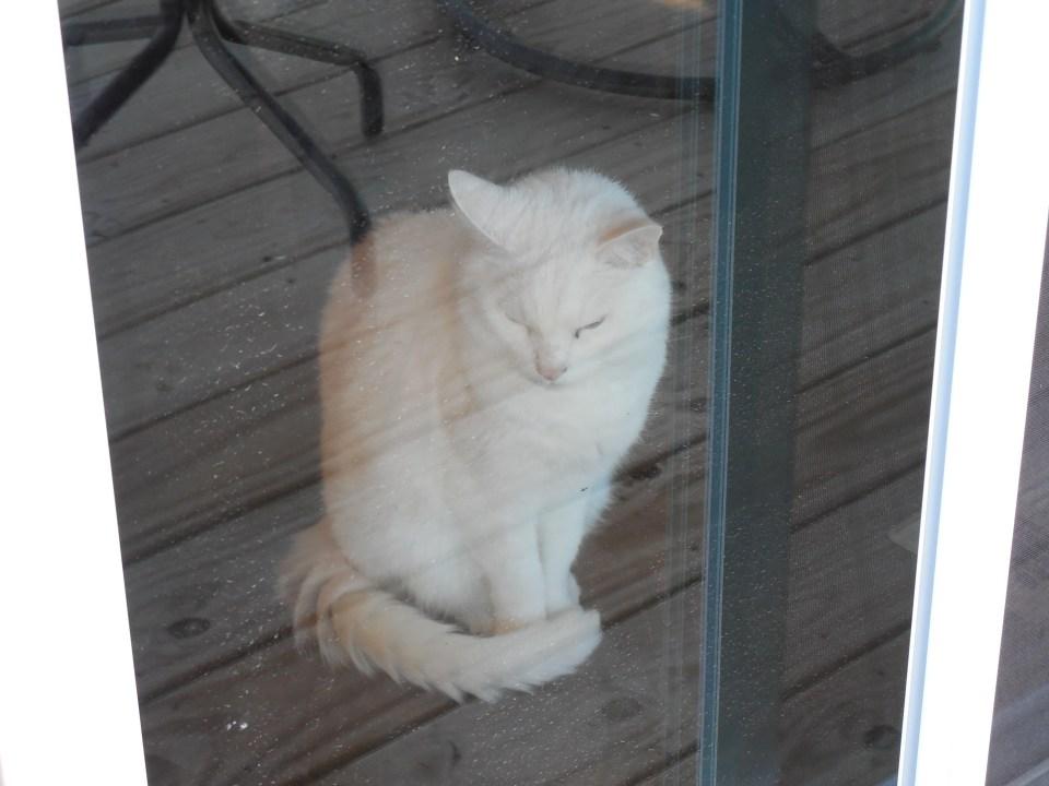 china kitty