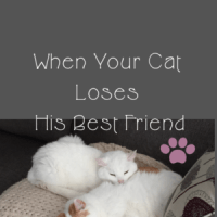 When Your Cat Loses His Best Friend