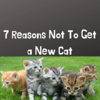 7 Reasons Not To Get a New Cat