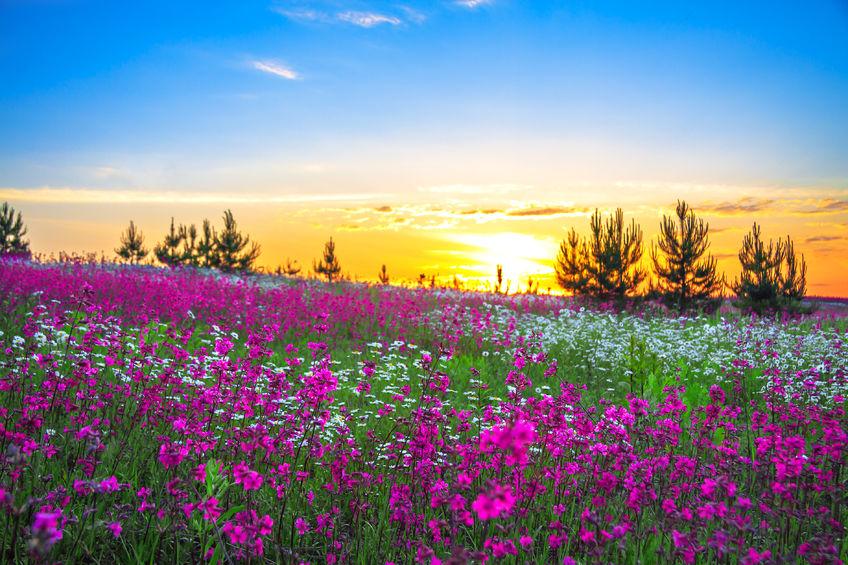 24362402 - sunrise and flowers scenery