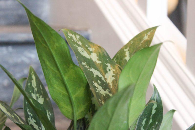 partial close-up