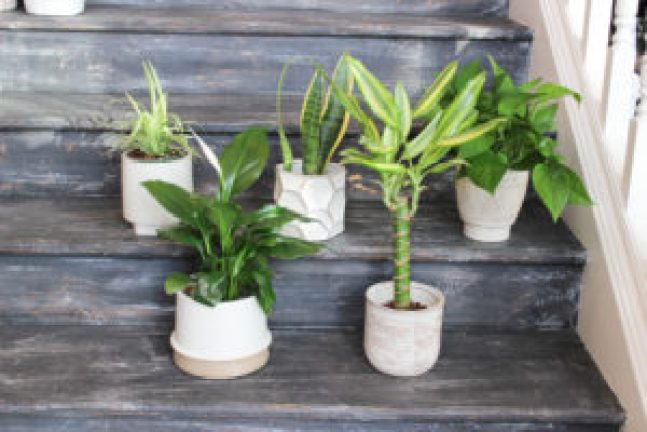 All air purifying plants