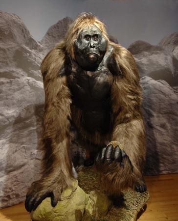Why bigfoot cannot be Gigantopithecus
