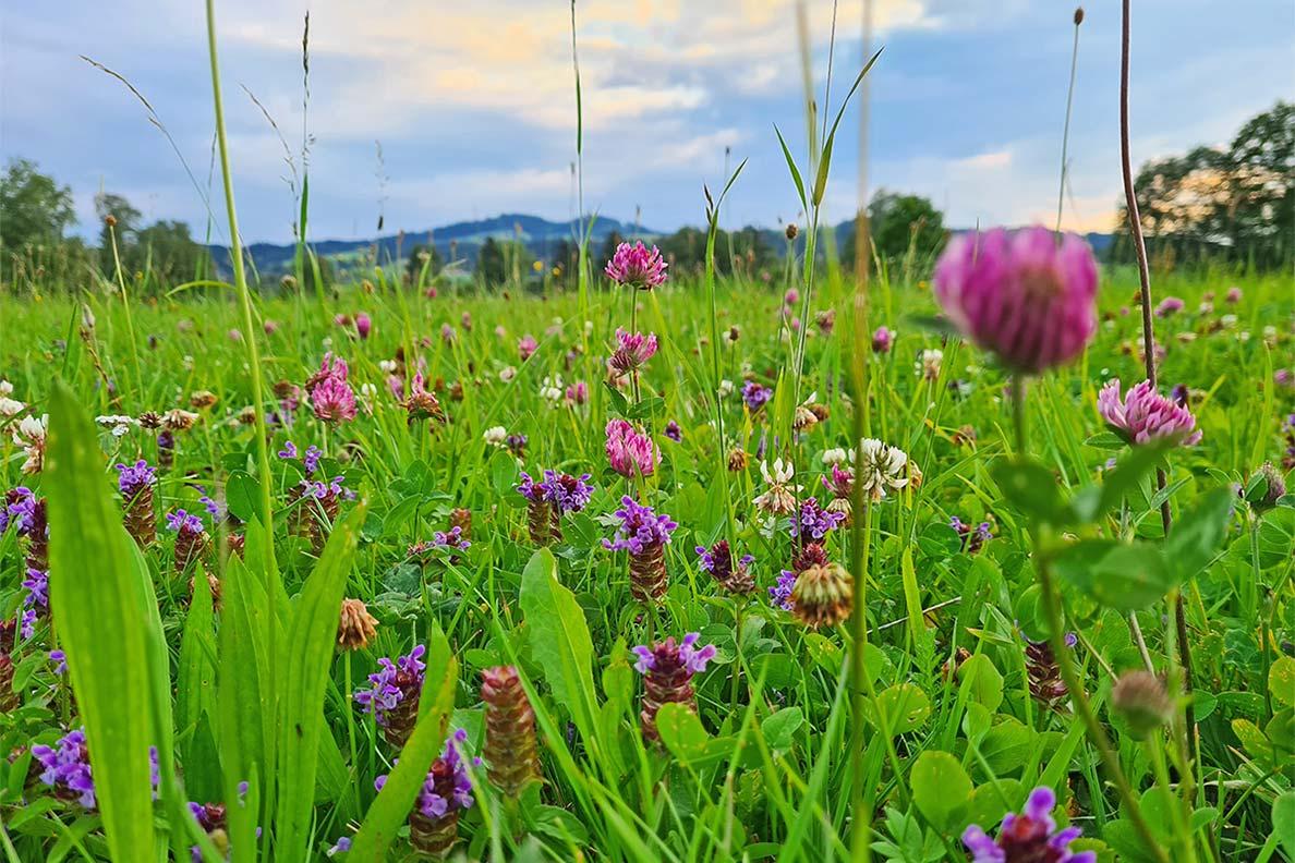 RetroCats Woche: Eine Blumenwiese im bayerischen Voralpenland