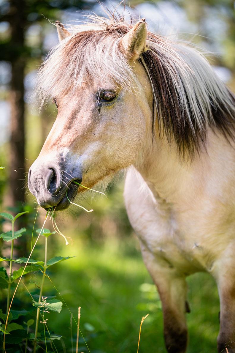 RetroCats Wochenrückblick: Ein Pferd im Wald im Allgäu