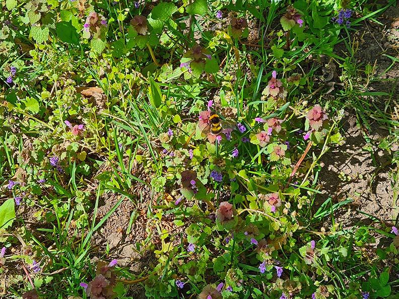 Eine Blumenwiese mit Hummel