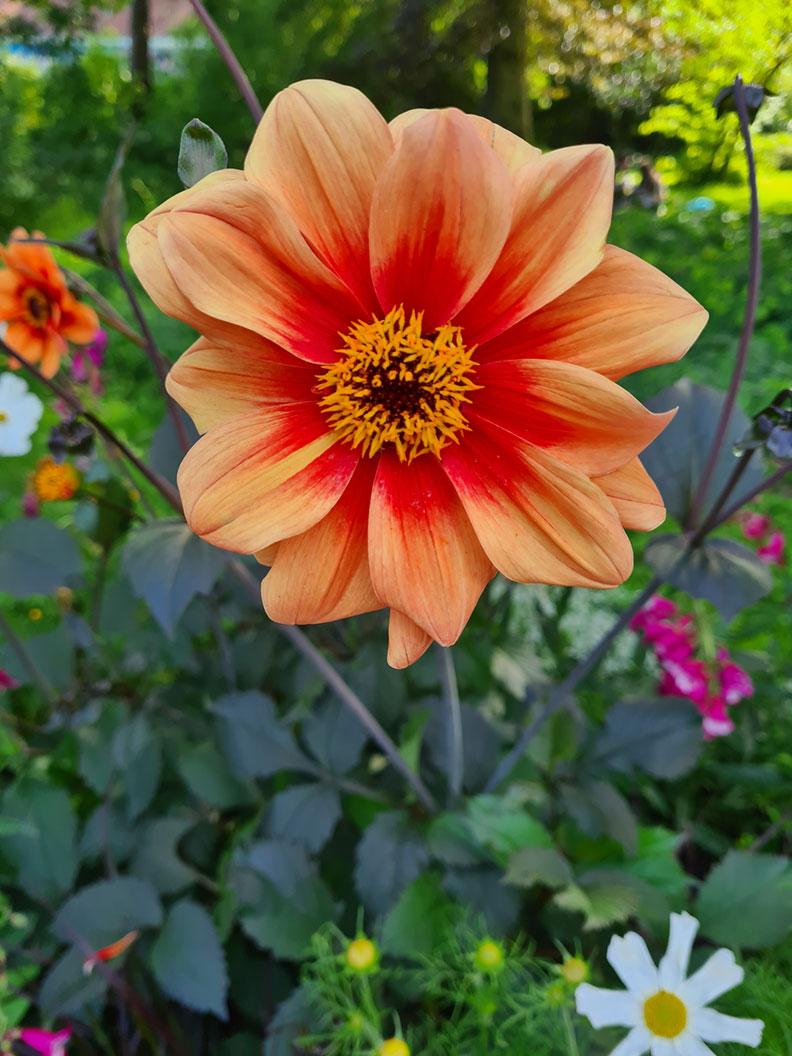 Eine orange Blume in einem Park in München
