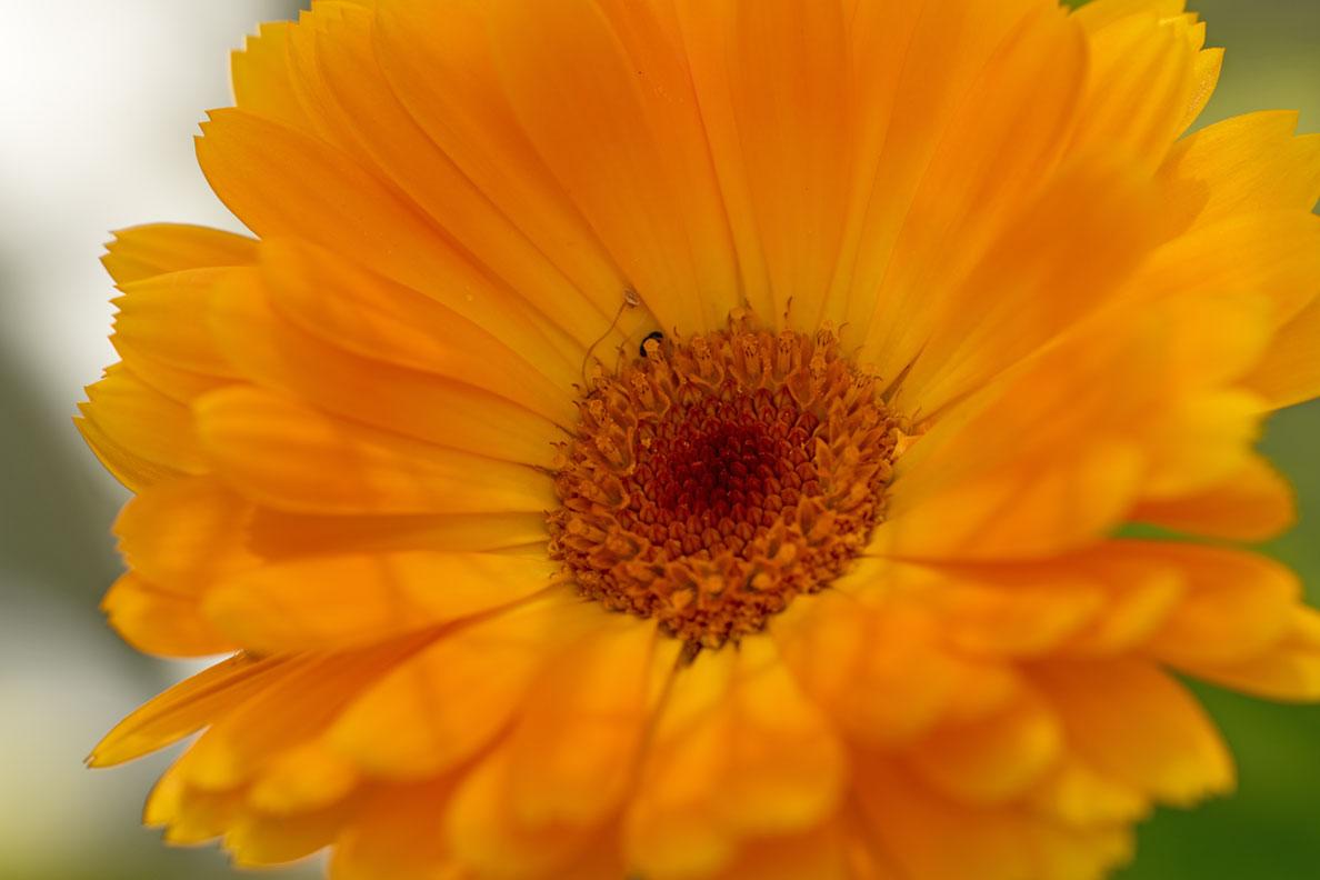 Eine orange Blüte auf RetroCats Balkon