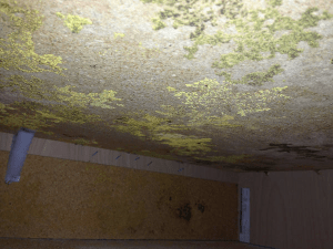 This mold growth was created between the base of kitchen cabinets and thickened gypsum-based flooring underlayment installed in a hot, humid climate.