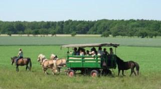 Pferde-Kooperation im Bereich Tourismus, Ökodorf Sieben Linden