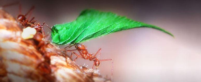 Ameisen sind gemeinsam stark