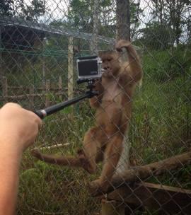 Apen syntest det var veldig gøy med kamaraet til Sondre.