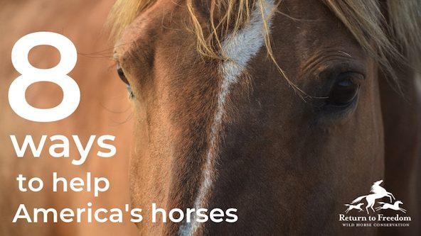 8 ways to help america's horses copy