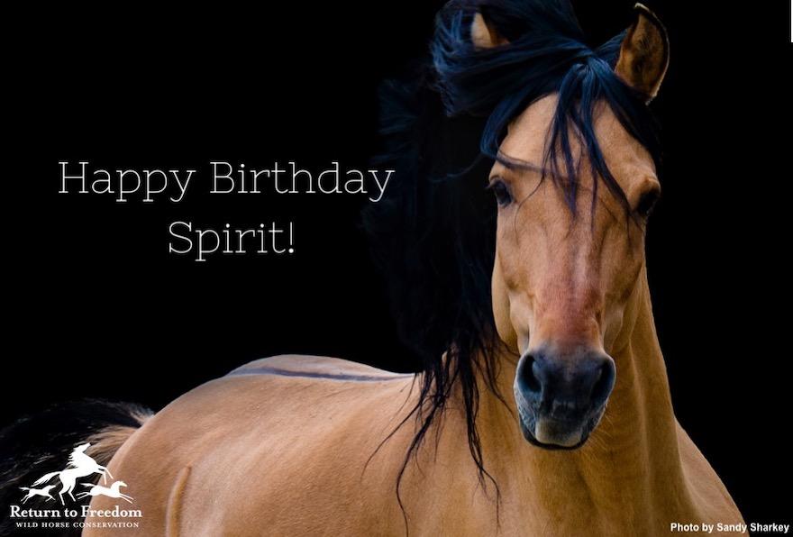 Sandy Sharkey Birthday Pic