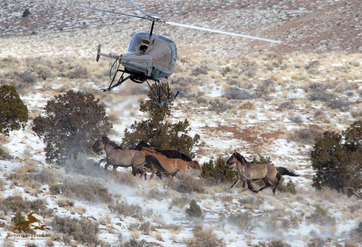 Sulphur Springs Wild Horse Roundup