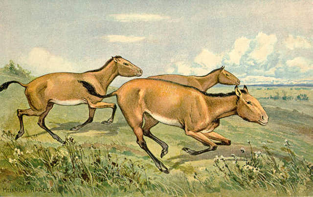 Evolution HorseTalk