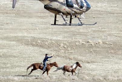 Cedar Mountain Wild Horse Roped