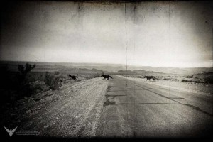 Cold Creek Herd