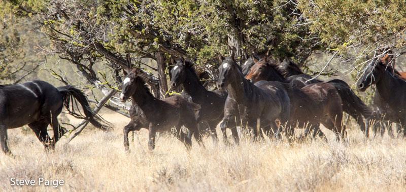 Devils Garden Wild Horses