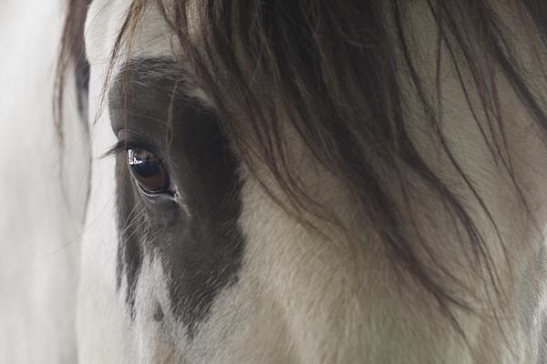 equusBRISTOLMACDONALD