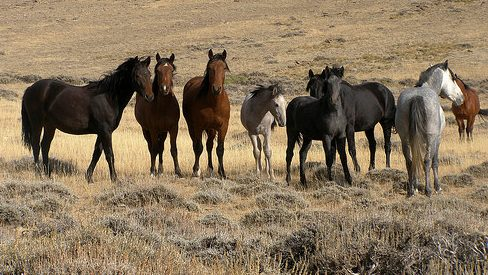 fifteenmilehorses