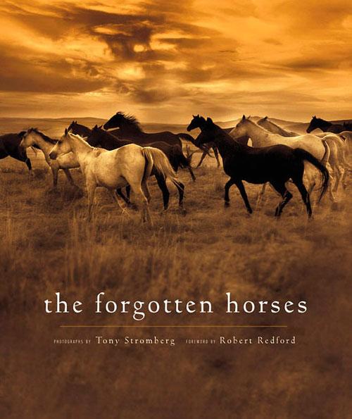 Forgotten Horses by Stromberg