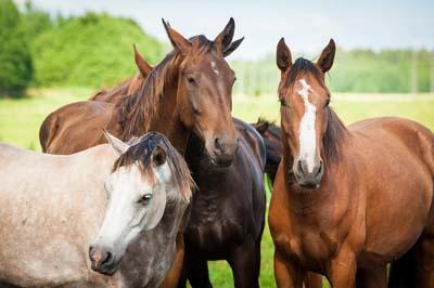 good-horses-h-589