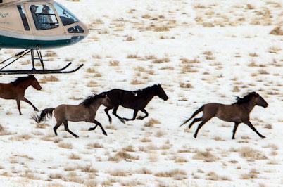 horse-chase