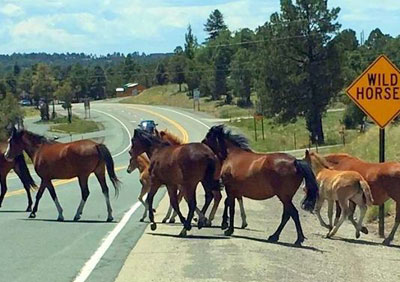 Wild Horse Crossing
