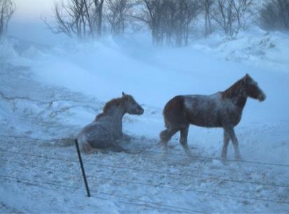 Wild Horse South Dakota Rescue