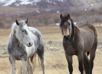 Wild Horses of Wyoming