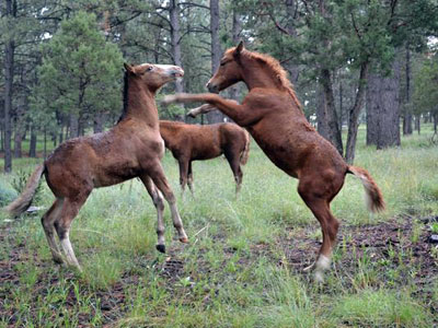 two-foals