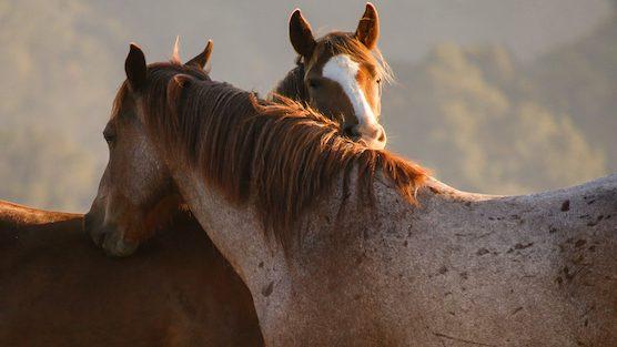two friends grooming – N.DeMayo copy