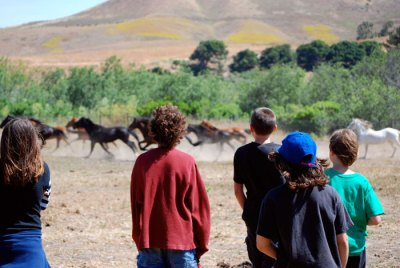 Return to Freedom Volunteers and Visitors with Wild Horses