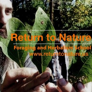 Return to Nature - Foraging and Herbalism School