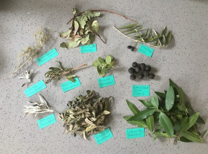 foraging california - Plant Voucher Specimens
