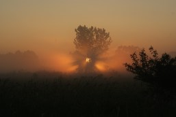dawns rays 1