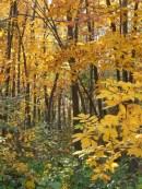 89 fall woods